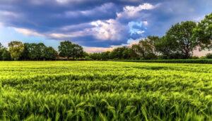 ¿Los beneficios de los alimentos orgánicos justifican el aumento del costo?
