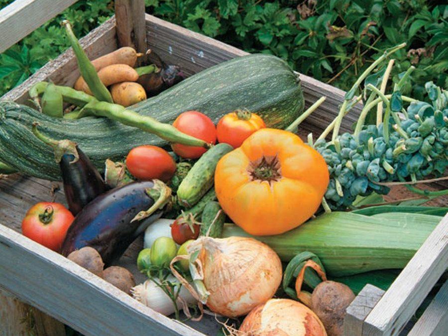 Foodborne Disease Outbreaks