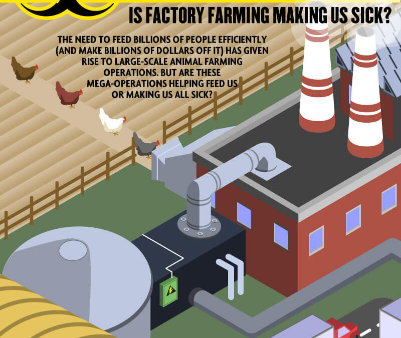 Food Poisoning: Is Factory Farming Making Us Sick?