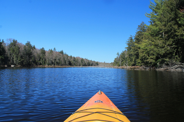 Body of water and trees from the seat of a kayak