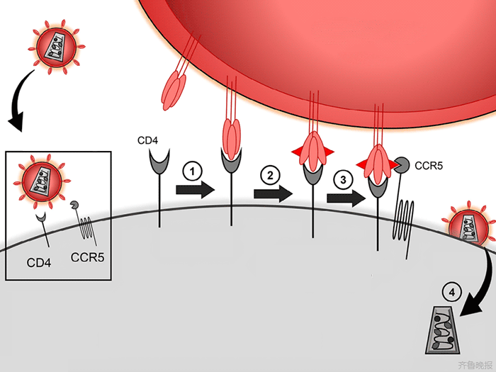 HIV-1 and CCR5 interaction