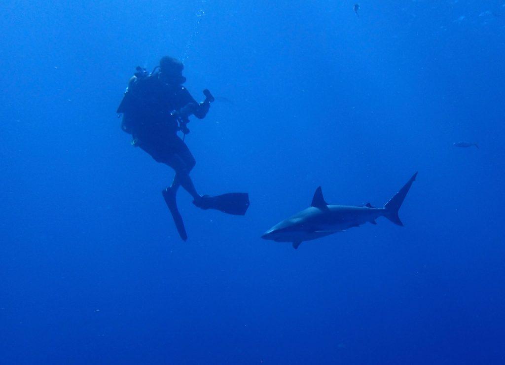A diva take a photo of a shark