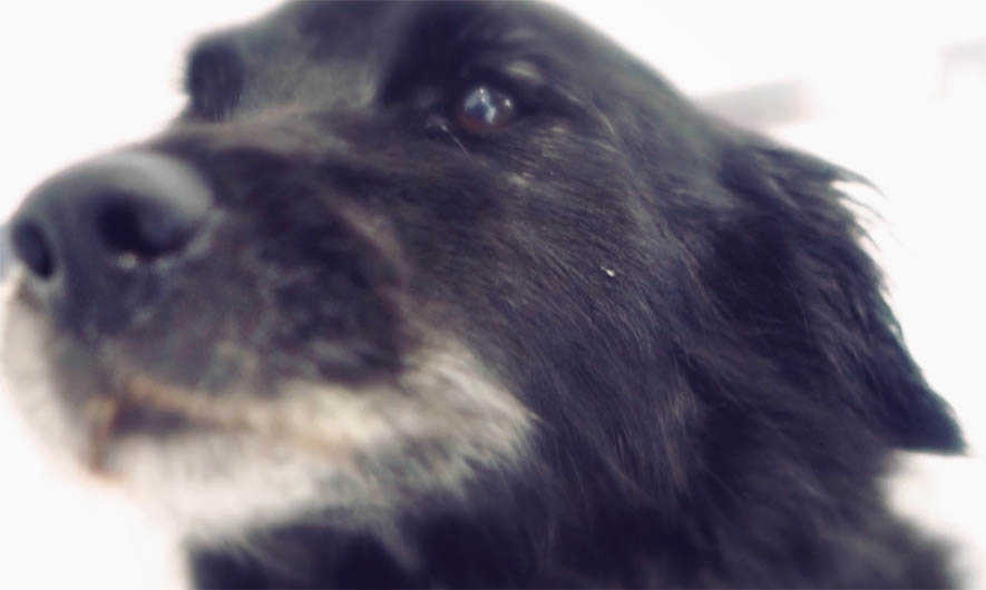 Dog video production