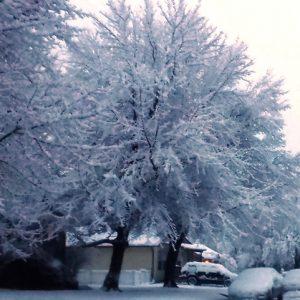 Bailey Tree LLC Winter Watering Program