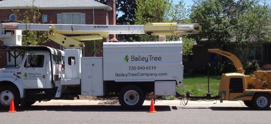 Bailey Tree LLC