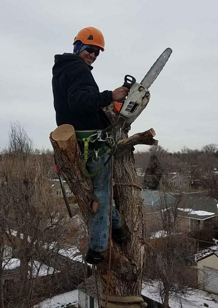 Denver Tree Removal