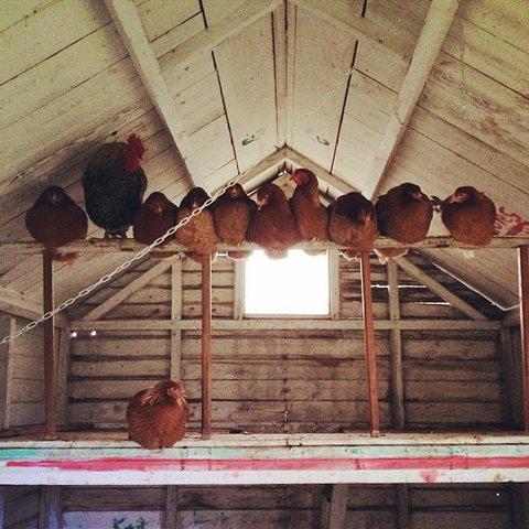 amanda-brooks-farm-03