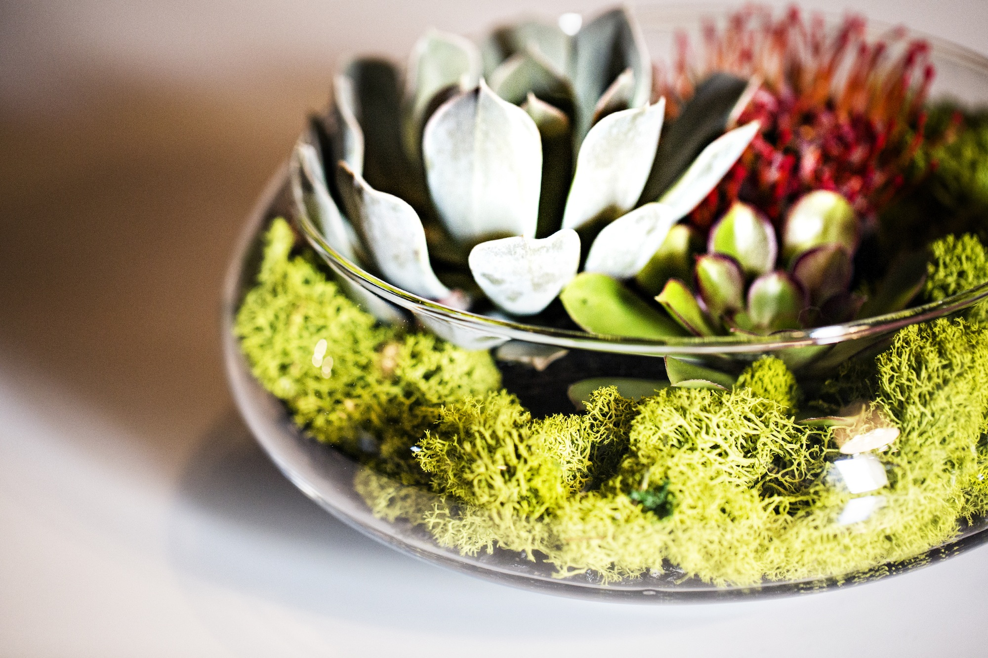 Succulent centerpieces - photo by Jessica Stout