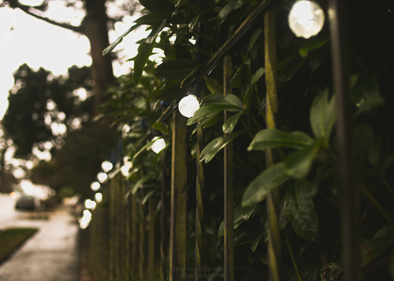 Lights on the fence