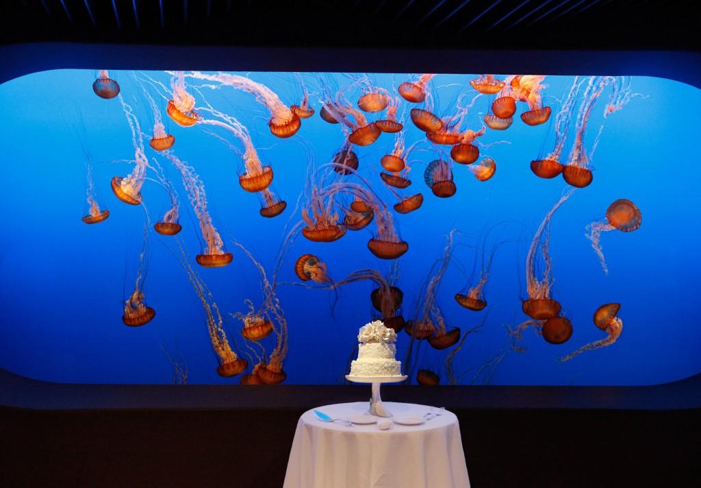 cake jellyfish tank 1