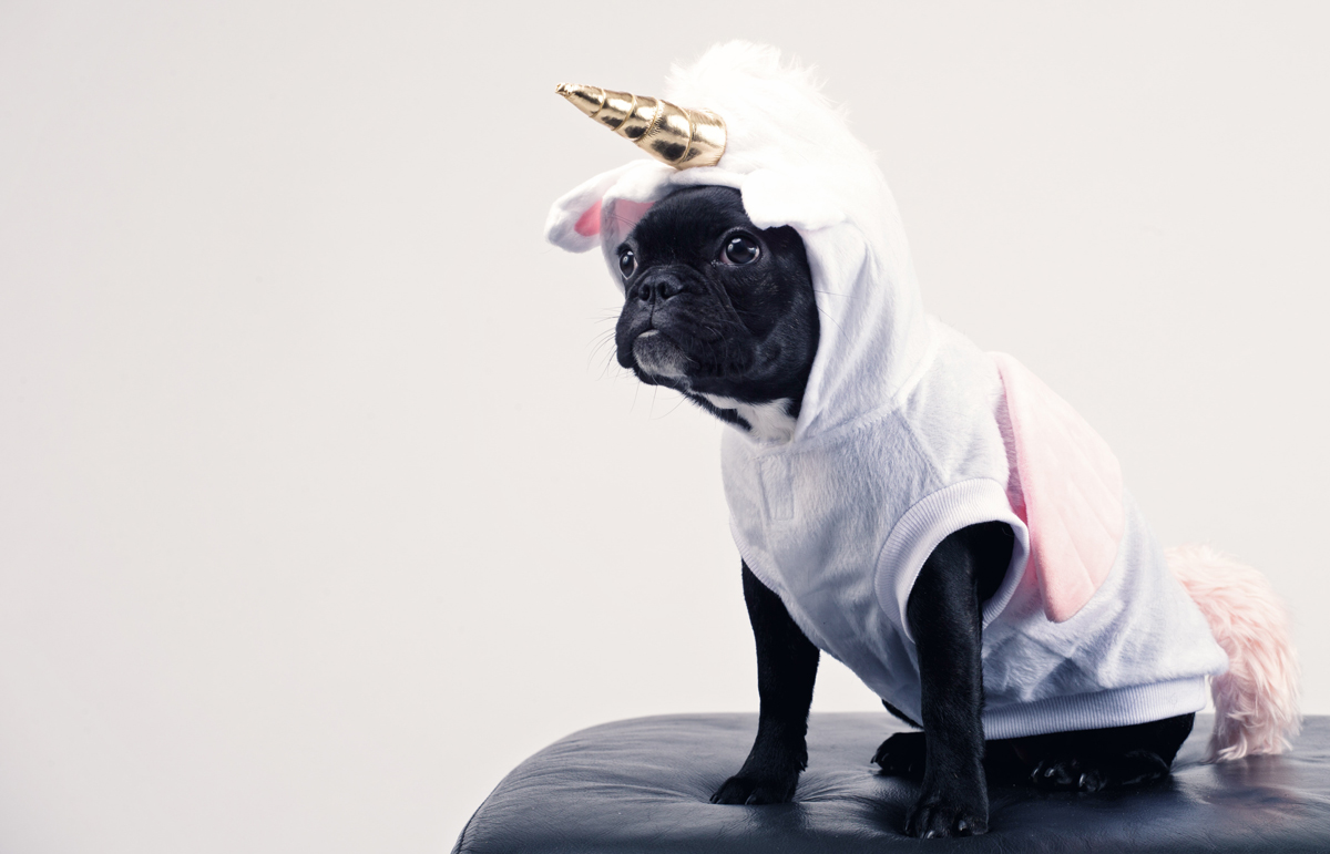 unicorn-dog