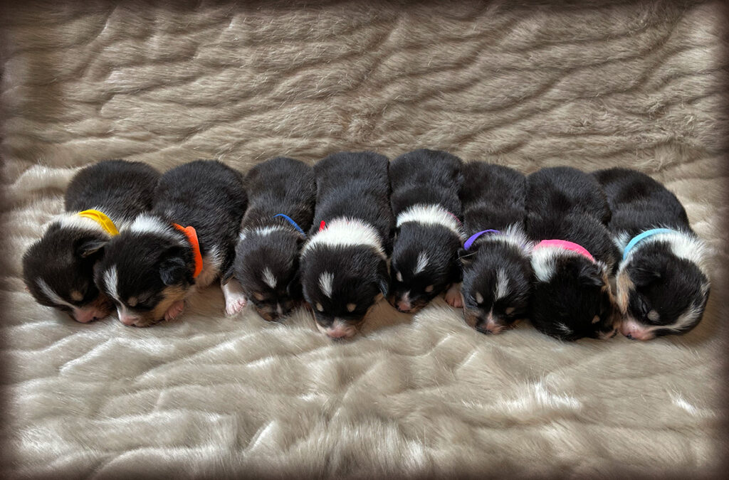 Holly's Puppies 12/20