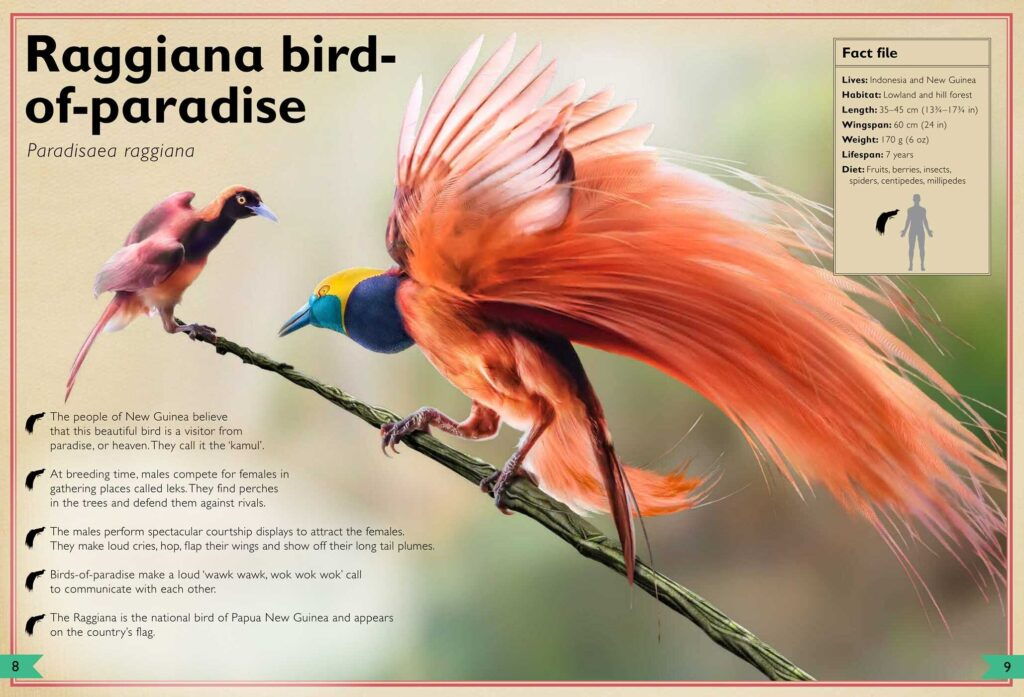The Magnificent Book of Birds inside image