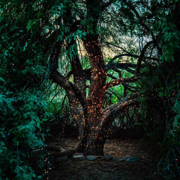 Multi-branch tree in forest with pixie lights