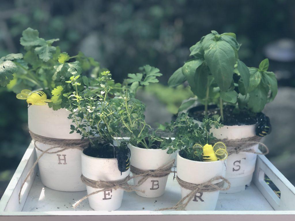 Learn how to make easy Herb Garden, Fun, budget friendly windowsill herb garden. Terra cotta pots garden diy.  Container herb garden.Year round container garden