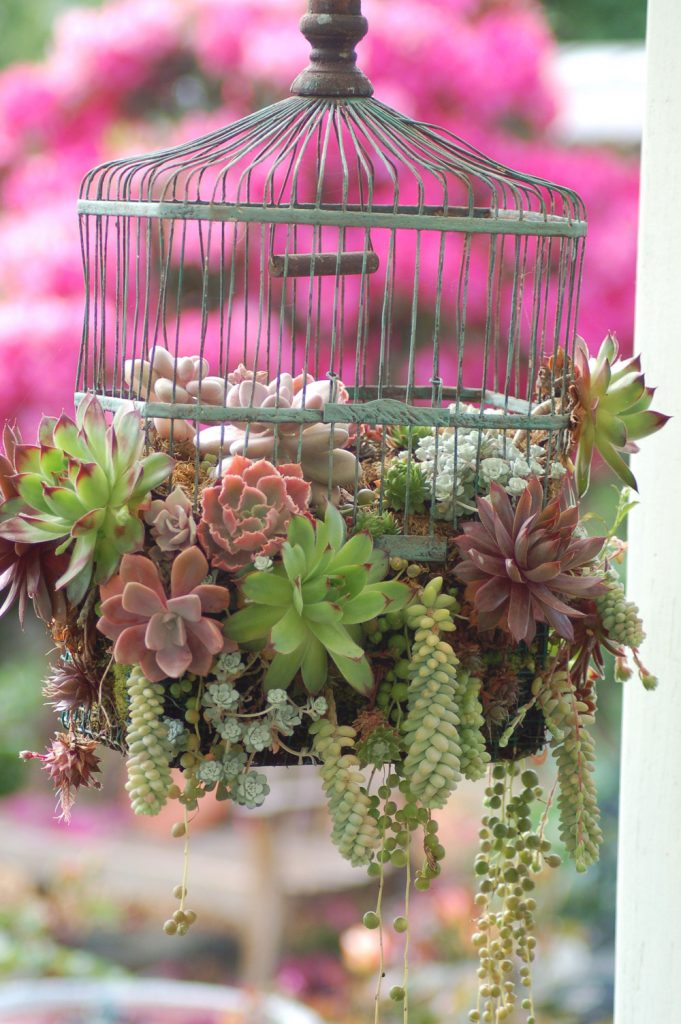 Learn how to make easy Herb Garden, Fun, budget friendly windowsill herb garden. Terra cotta pots garden diy.  Container herb garden