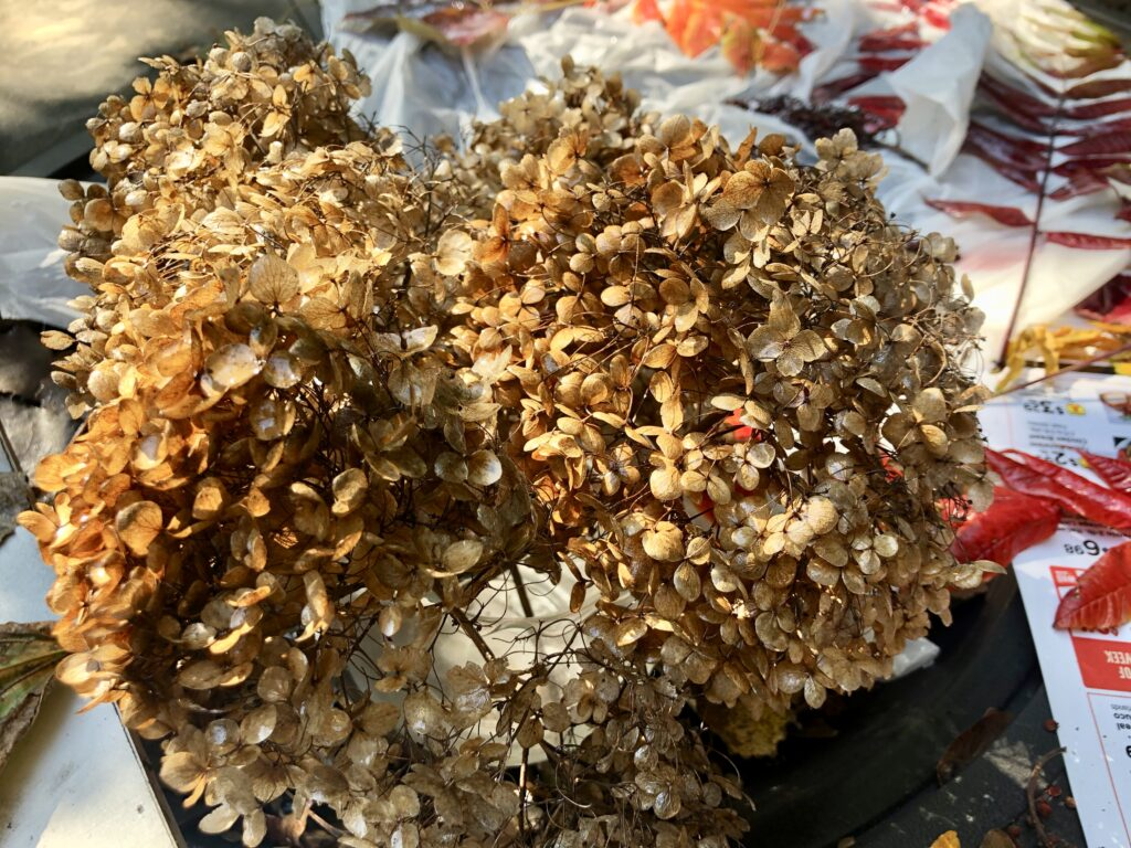 Learn how to preserve your fall leaves for crafting in one easy process. Fall crafting with leaves. Fall crafting