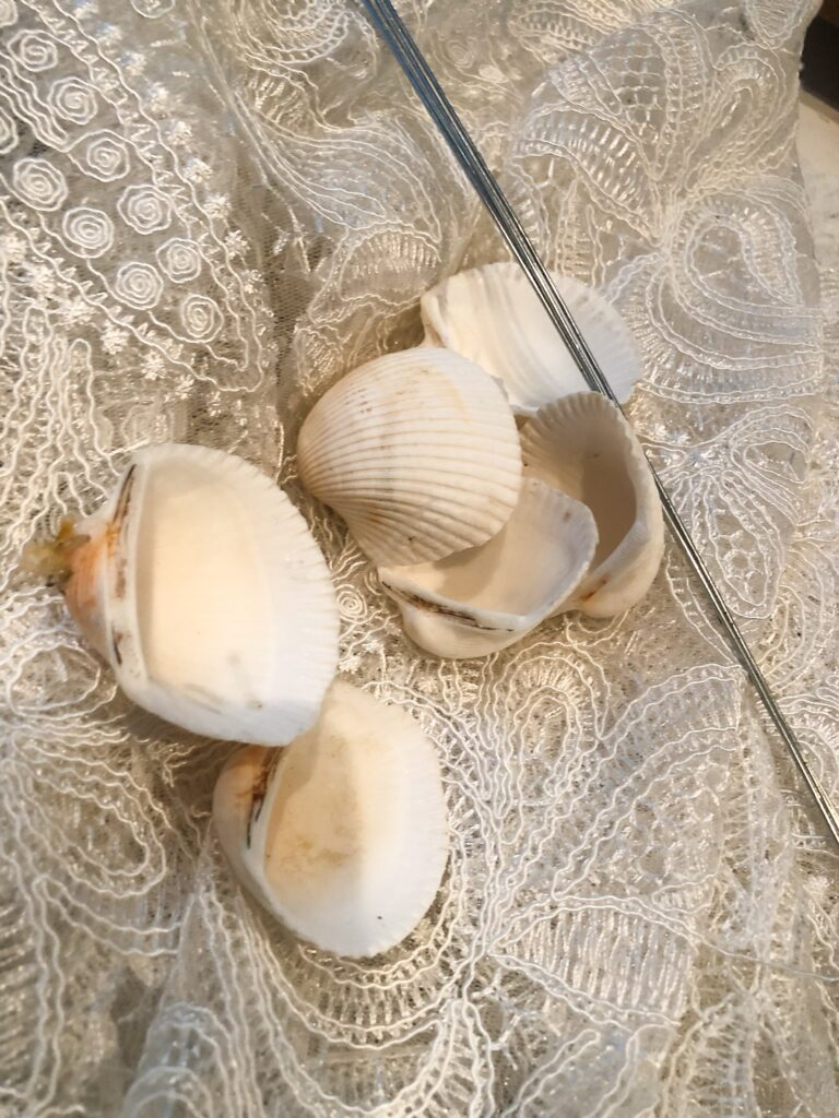 Let's celebrate Christmas in July with shells and coffee filters poinsettias. Coastal Christmas can't be celebrated without shell tree , shell angel or shell wreath
