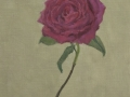 Red Rose #1