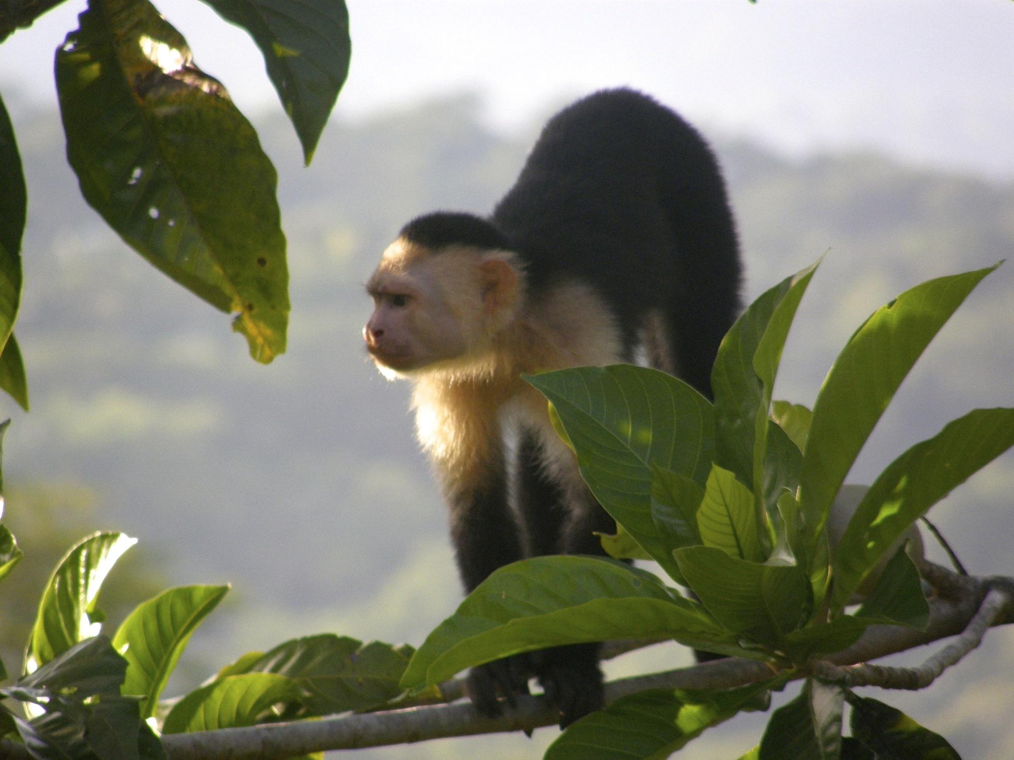Wildlife (5)