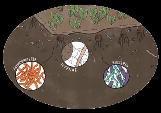 SoilsBacteria