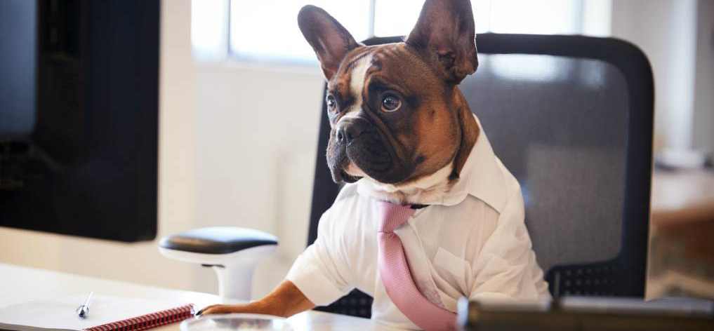 work from home backroom staff
