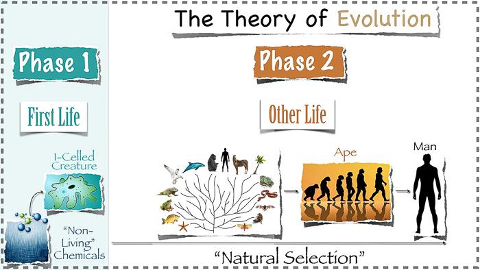 700_Evolution_and_Natural_Selection_04.27.14Evolution_slide_with_dotted_line_border.001