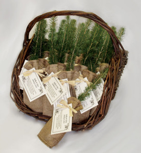 wedding-eco-tree-favor