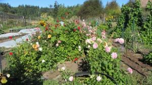 RW garden 1