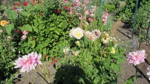 RW garden 2