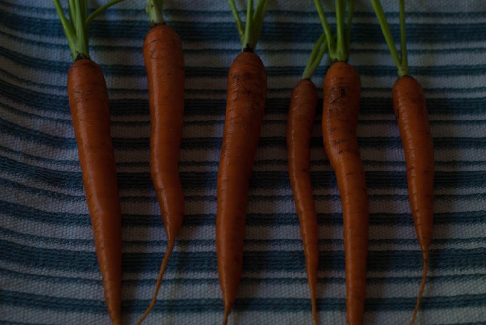carrot-3