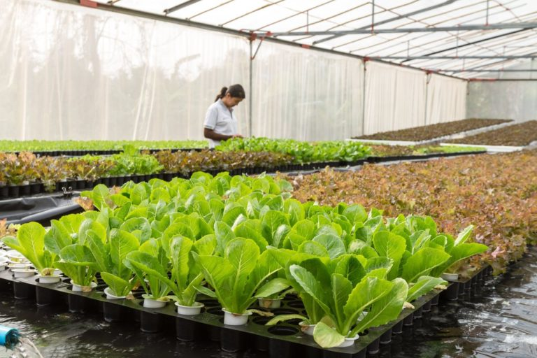 Providing recycled water for South East Farmers