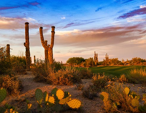 Desert Forest Golf Club