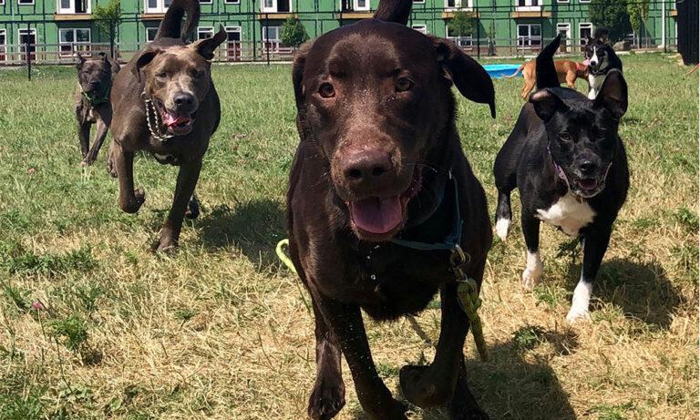 Kokomo Humane Society Playgroup Dogs