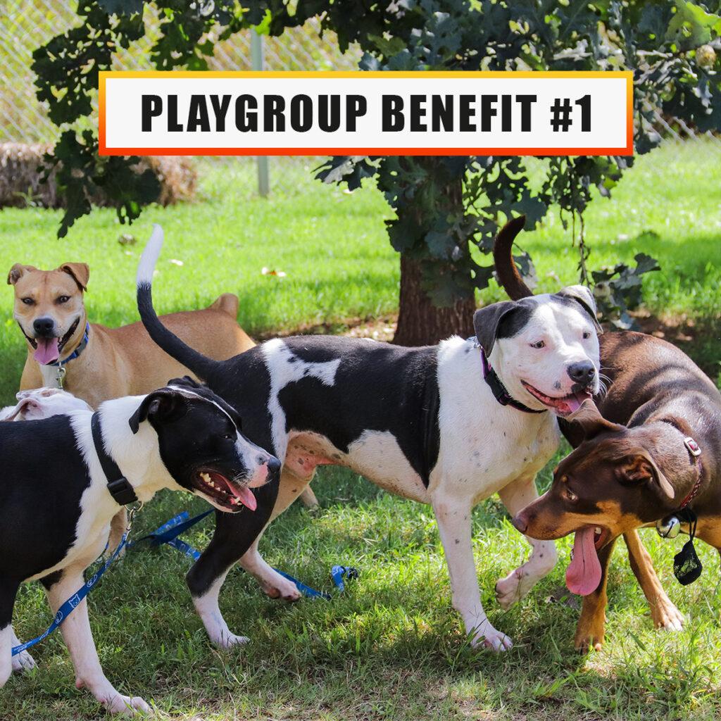 Playgroup benefit 1