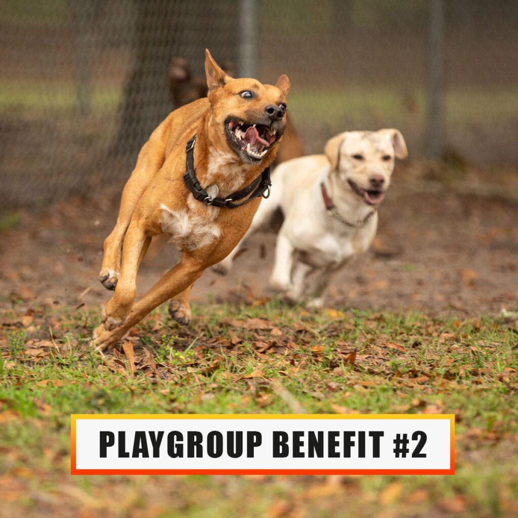 Playgroup benefit 2