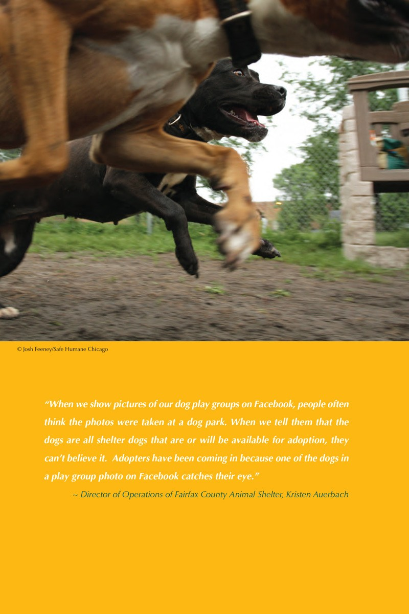 Dogs Playing for Life Resource Manual p2