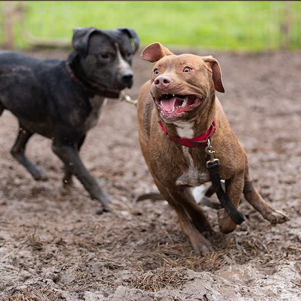 Dogs Running in the Mud Playgroup