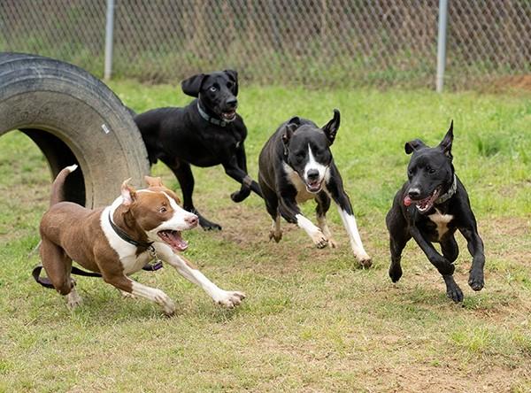 Dog playgroup