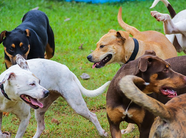 happy dogs playgroup
