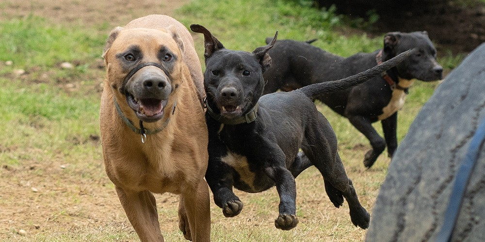 Dogs Running and Playing Shelter