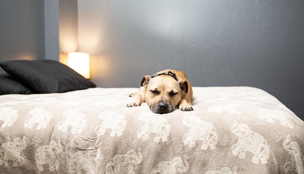 Shadow Program Dorm Room with Overnight Dog