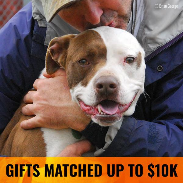 Animal Farm Foundation Gift Match