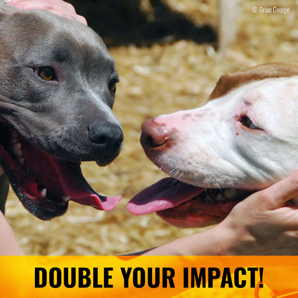 Animal Farm Foundation 10K Match
