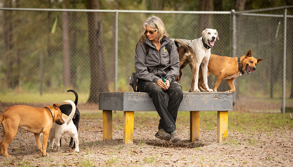 Playgroup Aimee Sadler Canine Center FL
