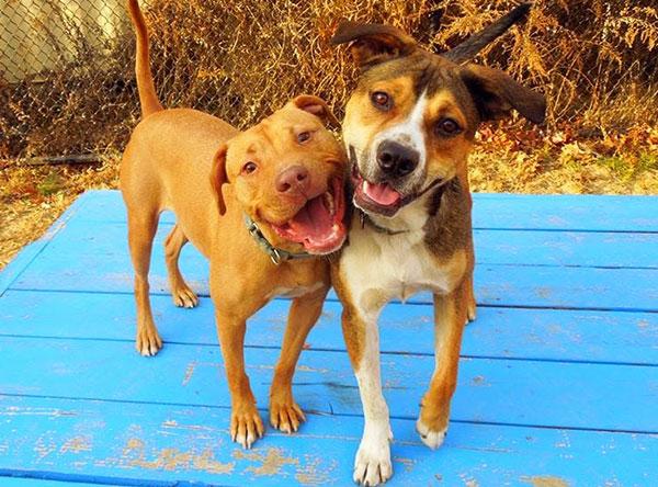 Sierra-and-Elvis-Dog-Friends-2