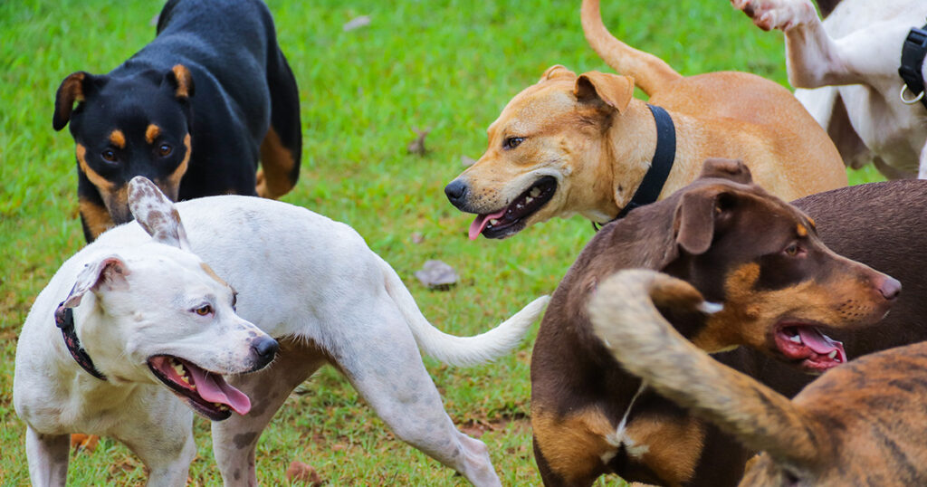 Dogs Playing in Playgroup