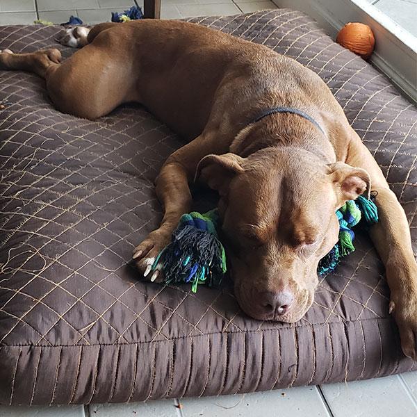 Zoey-sleeping