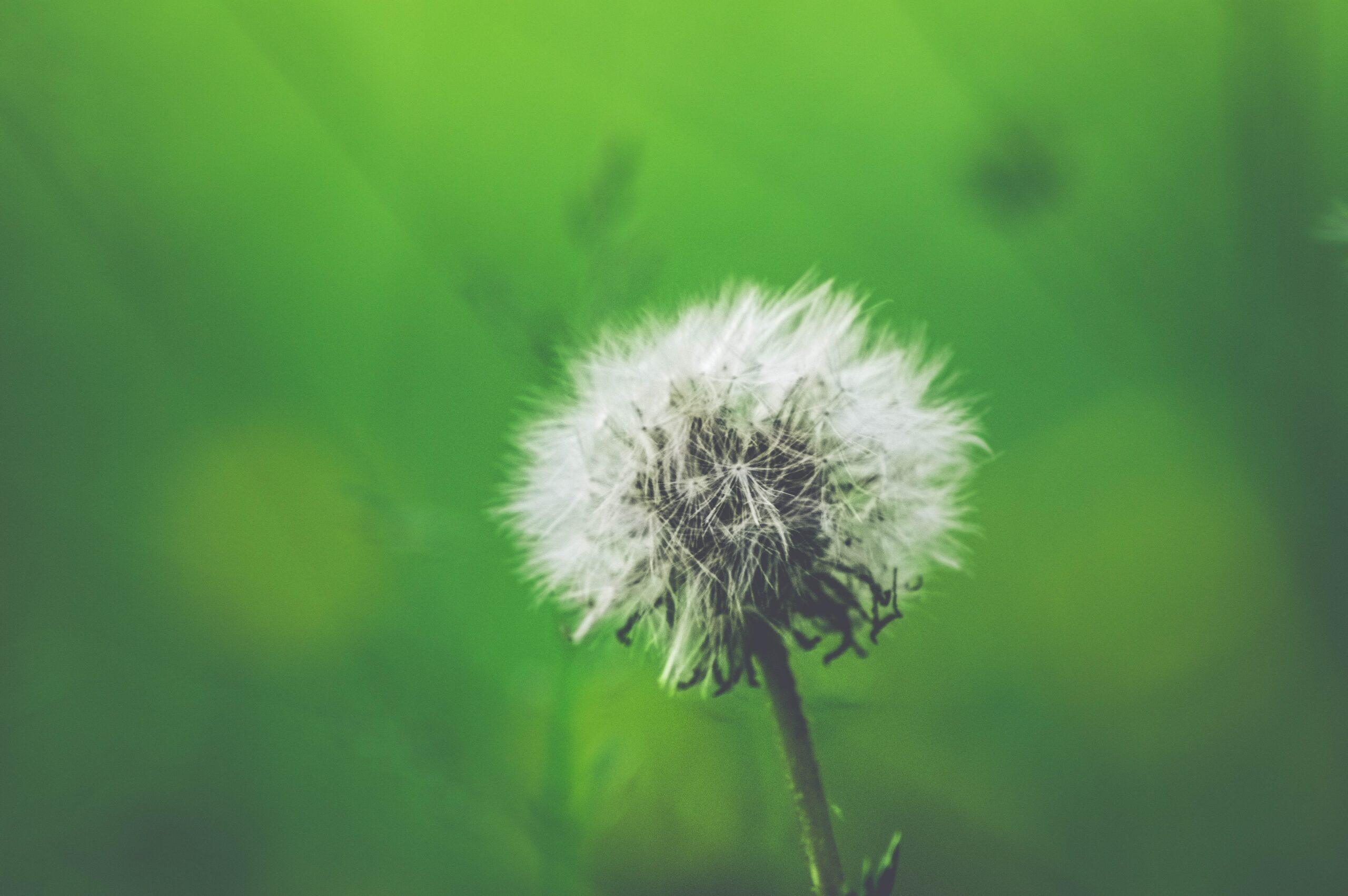 Breaking Down Seasonal Allergies – Prevention - Latch onto Health