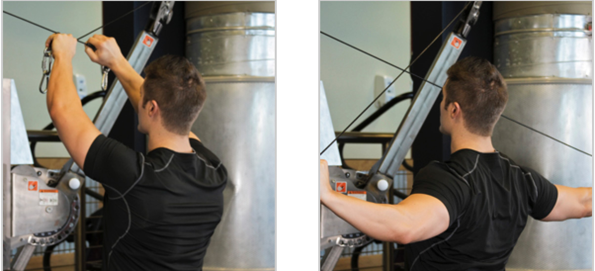 Cable Rear Delt Flys